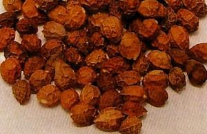 Brucea Seeds